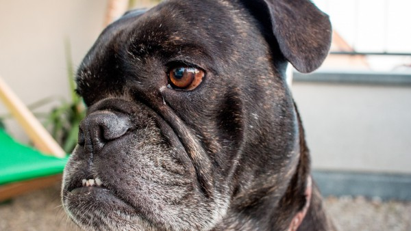 189Momo – the office dog