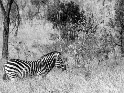 1096Zimbabwe Houseboat Safari Black & White